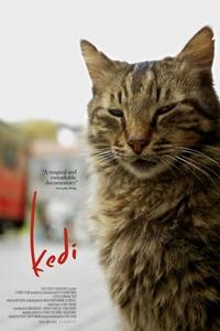 Poster of Kedi