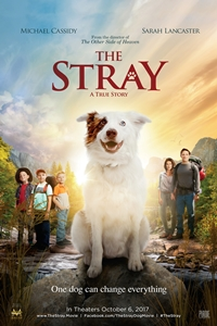 Poster of The Stray