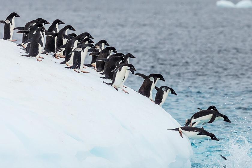 Hero Image for Penguins