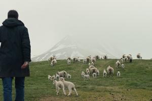 Lamb cast photo