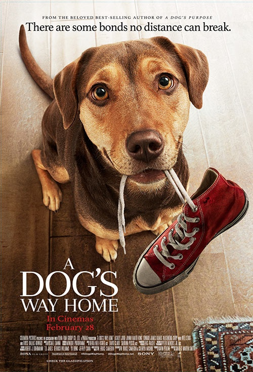 Poster of A Dog