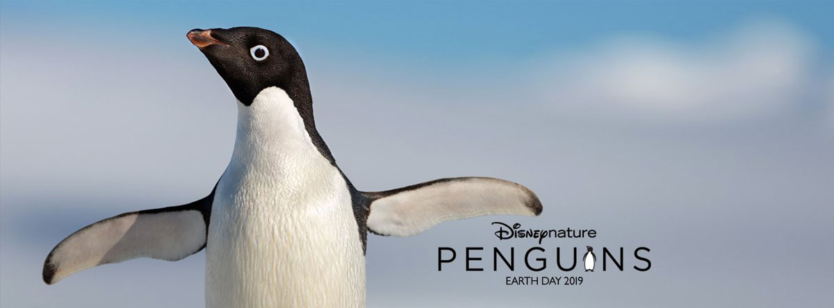 Slider Image for Penguins
