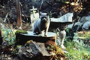 Still #2 forPet Sematary (1989)