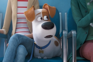 Still 0 for Secret Life of Pets 2, The