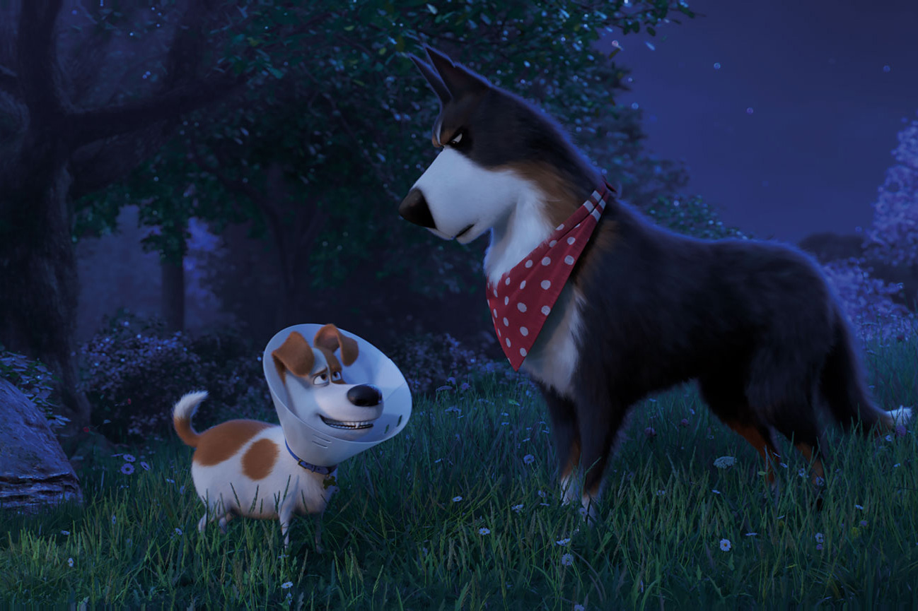 Photo 7 for The Secret Life of Pets 2