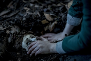 Photo 2 for Brahms: The Boy II