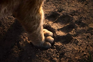 Lion King in RealD 3D, The Still 0